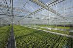 Serre horticulture