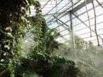 Serre du zoo de Beauval