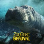 Beauval Hippo